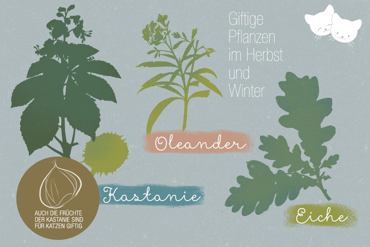 katzen_giftpflanzen_winter